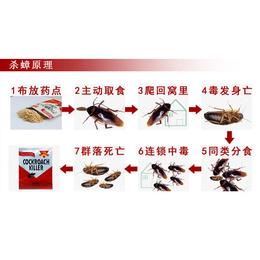 桂林灭蟑螂公司-工厂灭蟑螂公司-康程(推荐商家)