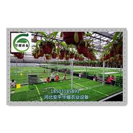 供应温室苗床新型农业种植设施成为未来农户发展趋势