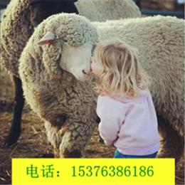 秋季养羊添加益生菌有什么好处