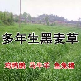 上海港进口泥炭椰糠赤玉土鹿沼土蛭石干水草珍珠岩清关市场价格