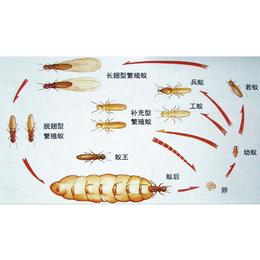 南昌家庭学校白蚁防治公司 专业灭蚁灭虫 优质服务缩略图