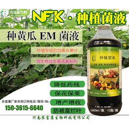 黄瓜保花坐果用的益生菌微生物制剂怎么用