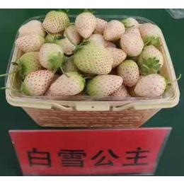 全明星草莓苗哪里有卖,草莓苗,乾纳瑞农业(图)