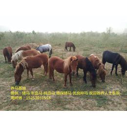 如何养一匹马 养马爱好者 马的改良 改良马