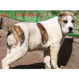 三个月肉狗苗价格 遵义市肉狗养殖场