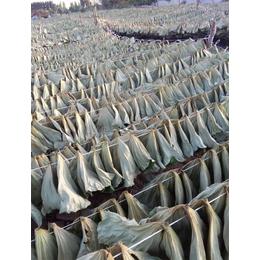 干荷叶 鲜荷叶 食品级及中药级 尚品莲皇产地批发供应