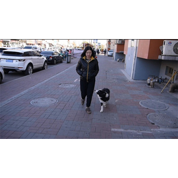 天津宠物狗训练乐园-天津宠物狗训练-酷贝贝训犬中心