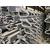 安徽阜阳 桥梁毛勒缝 C60 C80各种型号 伸缩缝 缩略图3