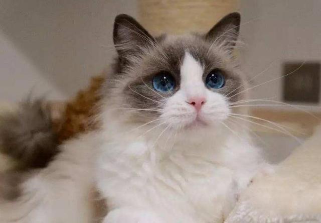 你家宠物猫咪不肯然你抱,你知道为什么吗?