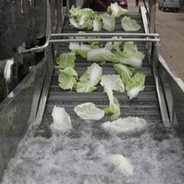 全自動蔬菜氣泡清洗機  洗菜機 大棗清洗機
