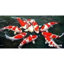 济南历下区燕山立交观赏鱼出租