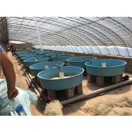 玻璃钢鱼池 水槽 耐酸碱养殖池 孵化池 强度高酸洗槽厂家定制