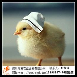 湖北咸宁血毛土鸡苗批发价格供应商