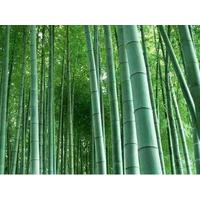 选择竹制品,必须要了解的常识